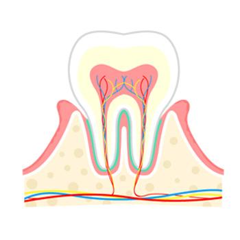 歯肉炎と呼ばれる初期の症状